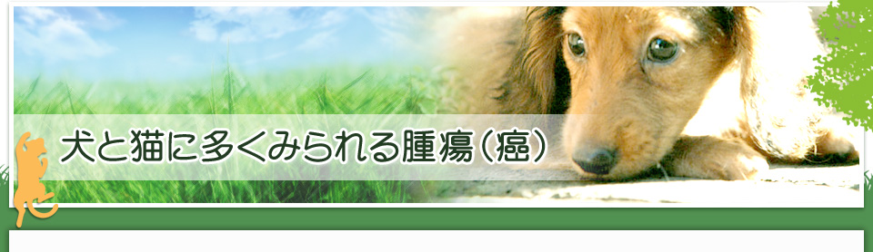 西東京市 ひとみ動物病院: 犬と猫にみられる腫瘍(癌)・肥満細胞腫・リンパ腫について
